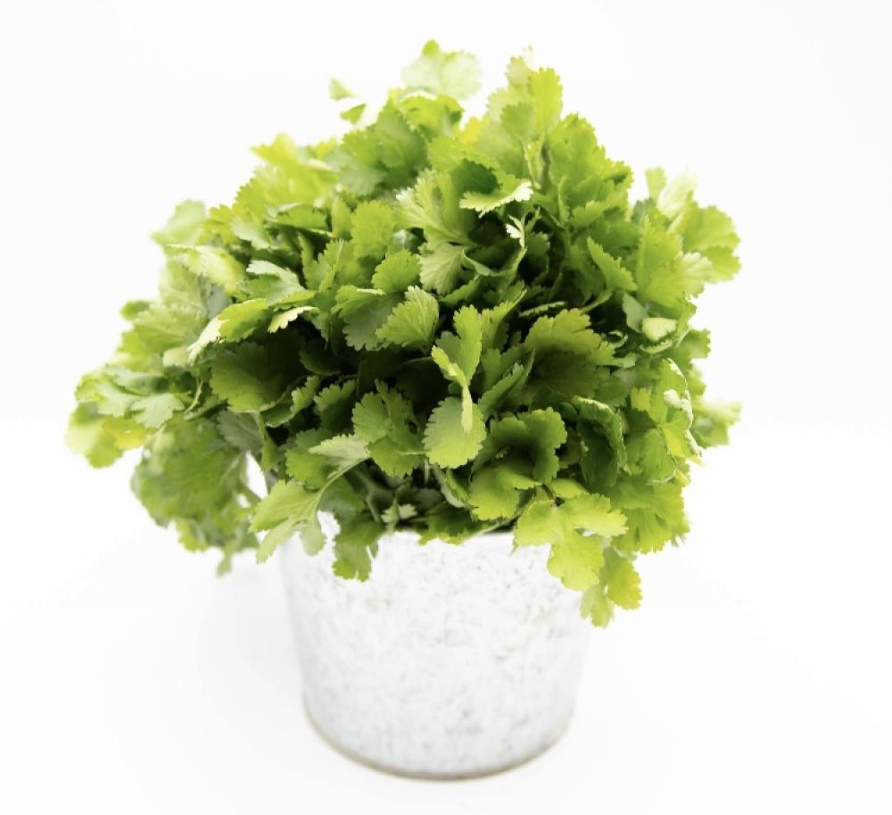 1 bouquet de coriandre fraiche
