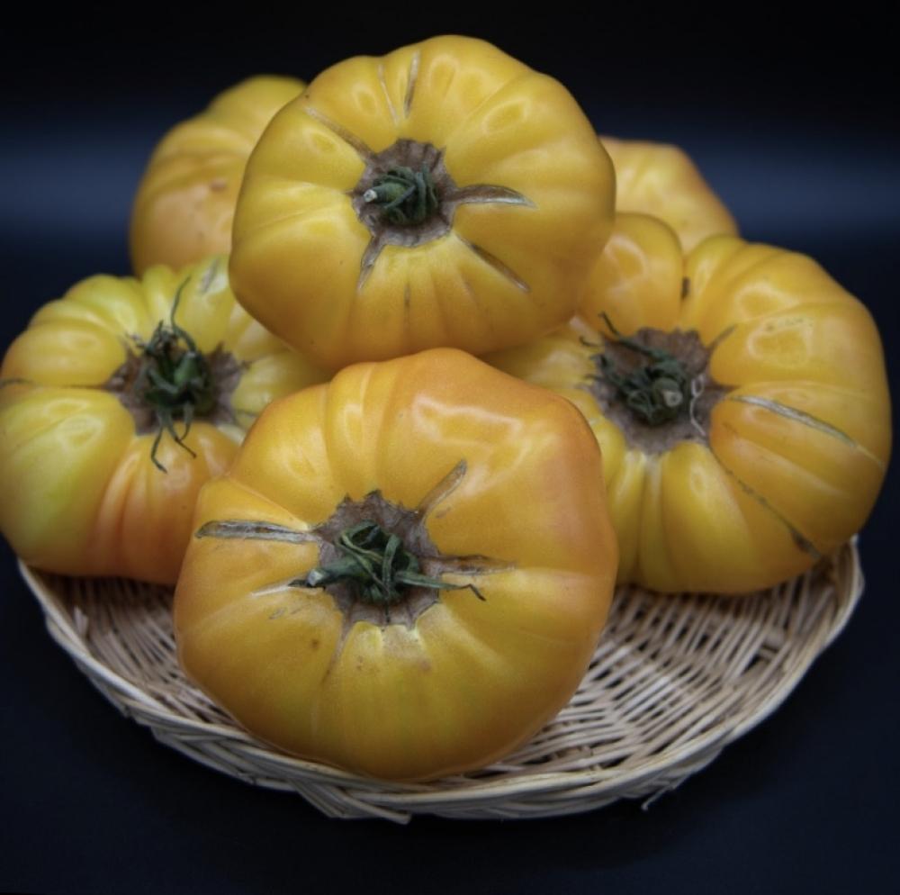 Tomates ananas de pleine terre «Les Cailloux de Provence».