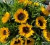 Le bouquet de 12 Tournesols (Le bon plan de la semaine)