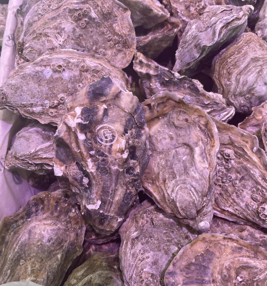 12 huîtres Gillardeau n°3