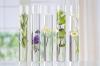 Ateliers d'aromathérapie sensitive