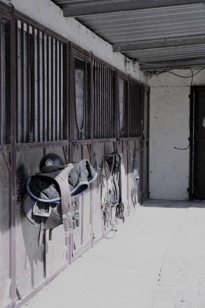 Cours d'Équitation Adultes (x10) - 3 mois