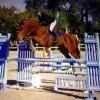 Cours d'Équitation Adultes- Galops 3 et 4 - (x10) 3 mois