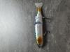 SAKURA S-SHINER - 14.5CM