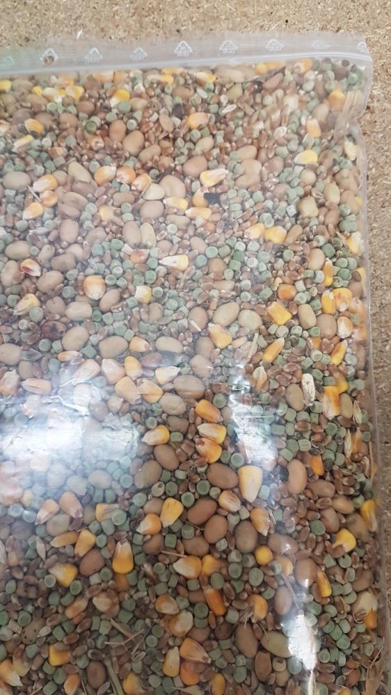 Mélange graines pêche à la carpe
