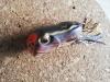 Osp diving Frog