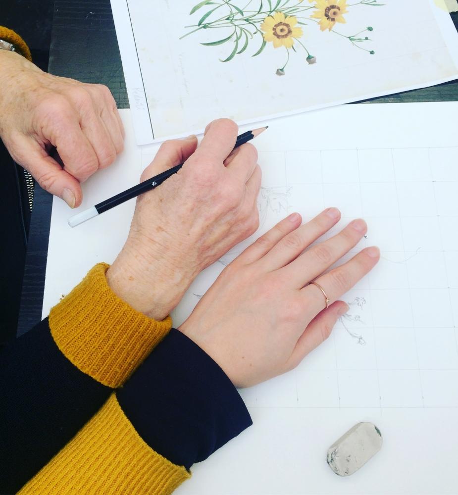 Cours de dessin individualisé - En Ligne