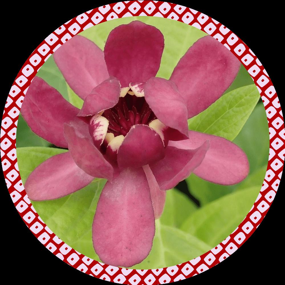Box de jardinage : ' Arbre aux Anémones '