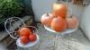 Cours de jardinage à domicile Paris et banlieue Ouest