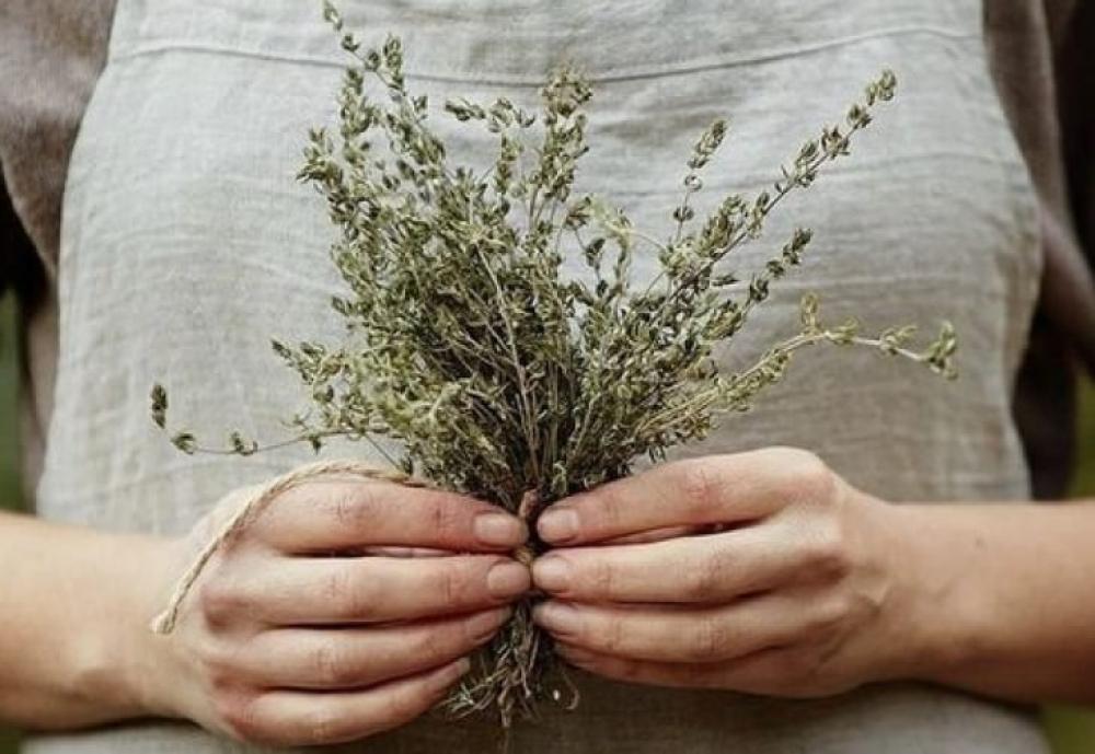 Les bienfaits des plantes pour votre santé
