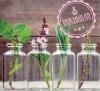 Initiation à l'aromathérapie - en ligne
