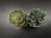 2 Plantes en Plastique