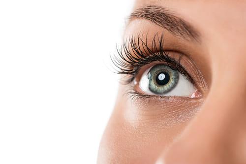 Les yeux, la vue