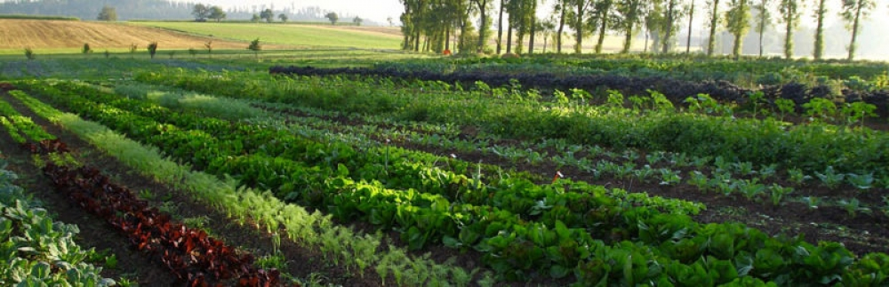 Market Garden System – Nachhaltig & Regenerativ
