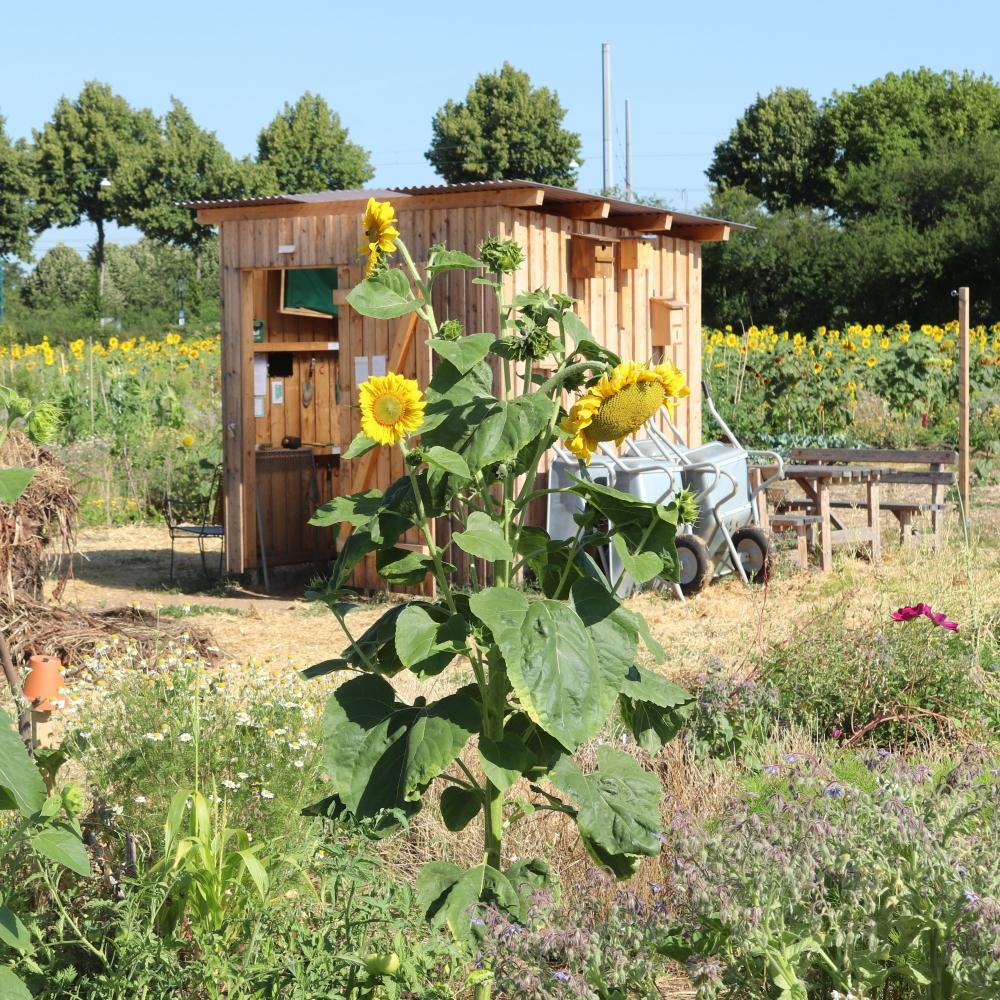 Warum einen Mikro Landwirtschaft Gemeinschaftsacker?