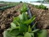 Bio-veganes Gemüse regional beziehen