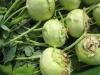 Solawi Landwandel: Gemüse, Kartoffeln und Getreide vom Lindenhof