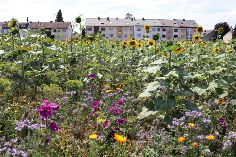Blühpatenschaft Feudenheim Nord
