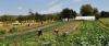 Mietgärten und Miethühner in Edingen-Neckarhausen