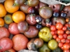 Mischkultur Bunte Tomaten mit Basilikum