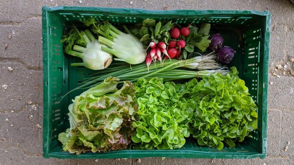 Gemüseabonnement für 2021