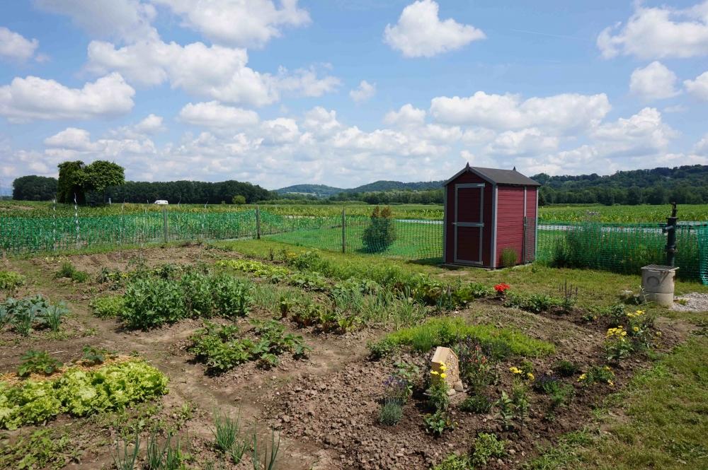 Mietgarten .. Dein Garten, deine Ernte ... in Werndorf bei Graz