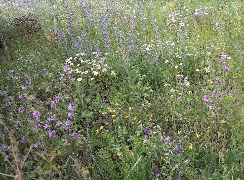 Patenschaft für unserer Wildblumen- und Wildkräuterwiese