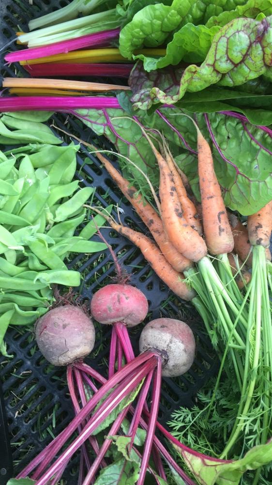 Gemüsekiste von März - Oktober