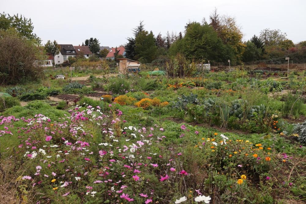 Kräuter und Blumen als Mischkulturpartner
