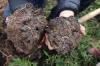 Fruchtbarer Boden als Grundlage für den Gemüseanbau