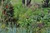 Auf gute Nachbarschaft – Pflanzengemeinschaften