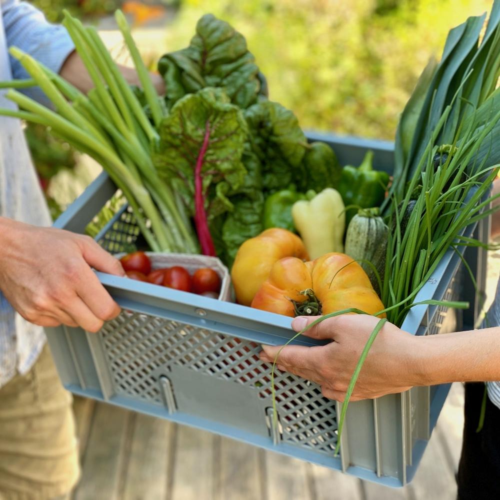 Gemüsekisterl - Eine frische Auswahl vom besten Bio-Gemüse der Saison