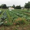 Gemüsehof Artenvielfalt