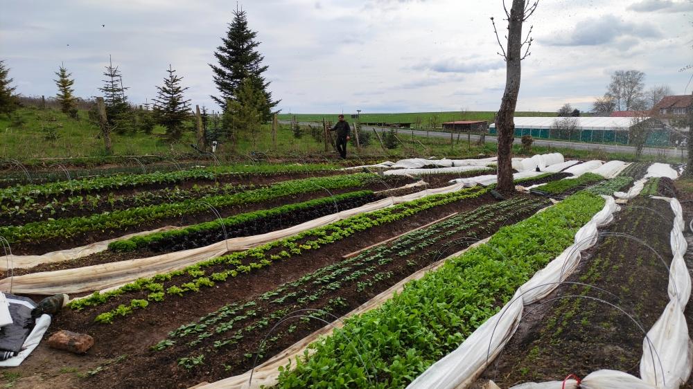 Gemüse-Abokiste 2021