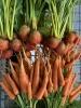 EDGA Gemüsekiste