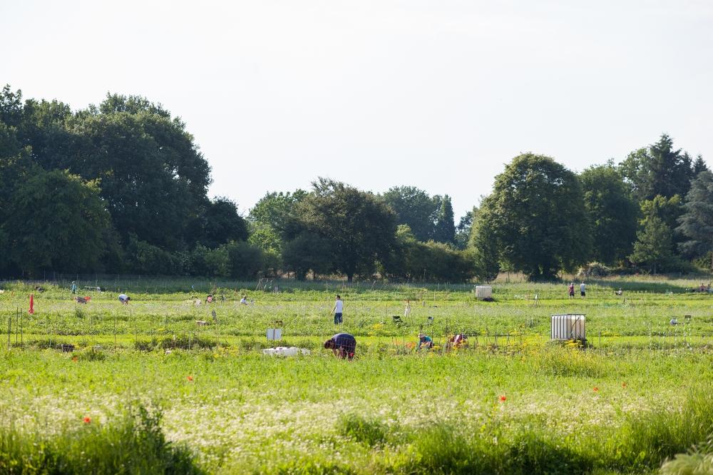 Saisongärten Hofgut Oberfeld