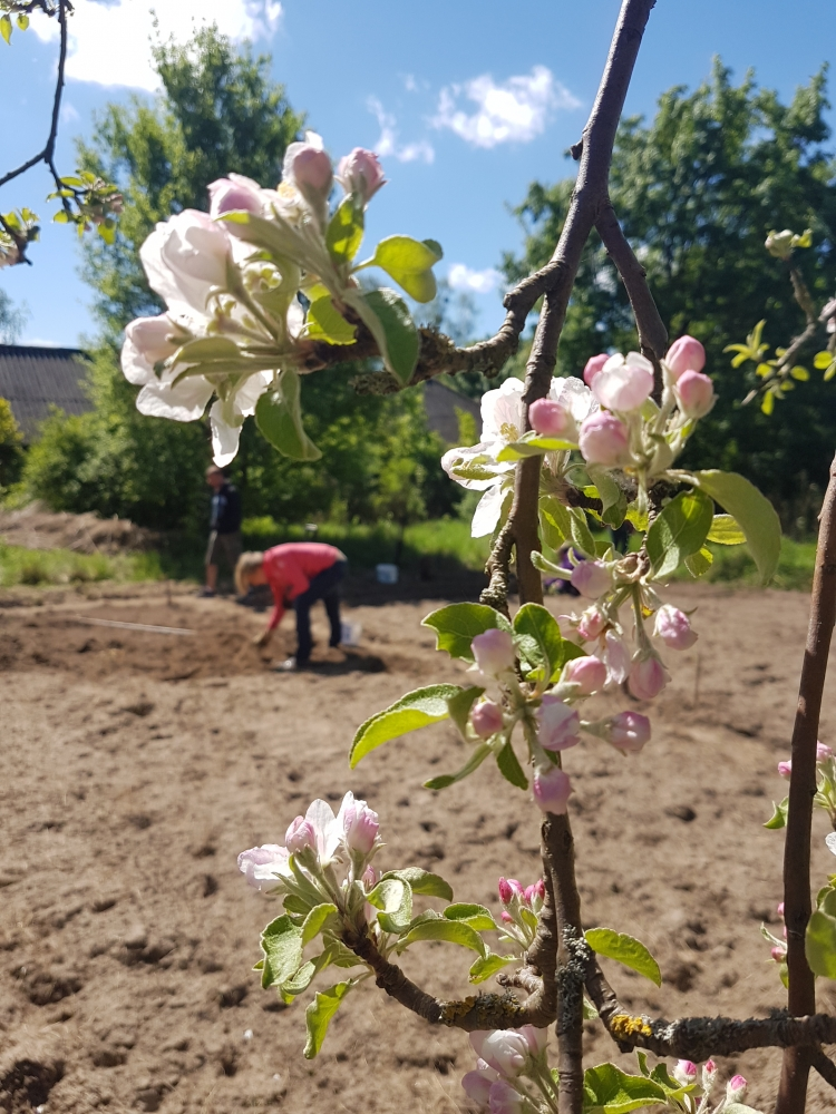 Gemüse selbst anbauen - Bernau bei Berlin