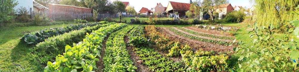 Market Garden Gemüseanbau Workshop