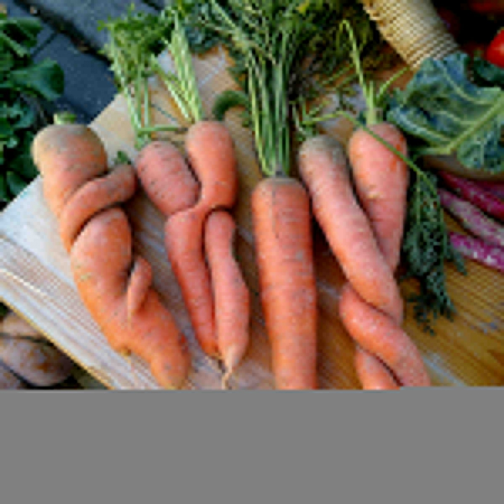 MITMACHEN bei Gutes Gemüse e.V.