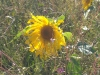 Blühpatenschaft für ein Insektenparadies