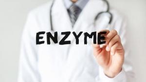 Enzymes digestifs,